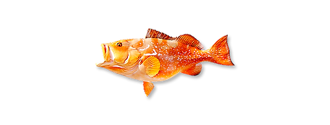 1-red-grouper-1.png