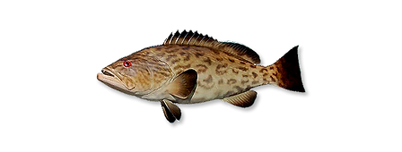 1-gag-grouper.png