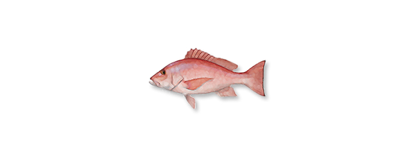 snapper-red.png
