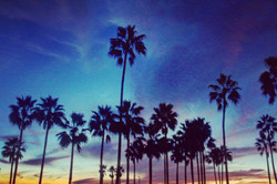 Palm trees and sunset in Venice Beach, CA