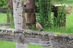 bird wa