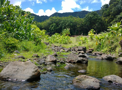 Lunch at the Lo'i Reveals Traditional Hawaiian Models of Communal, Sustainable Living