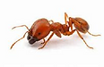 ant 3.png