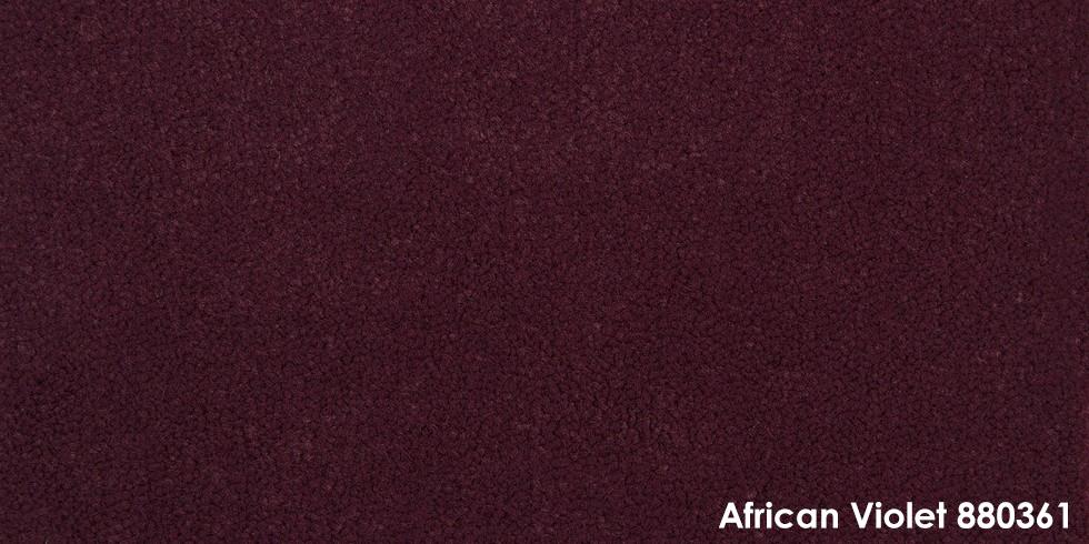 African Violet 880361