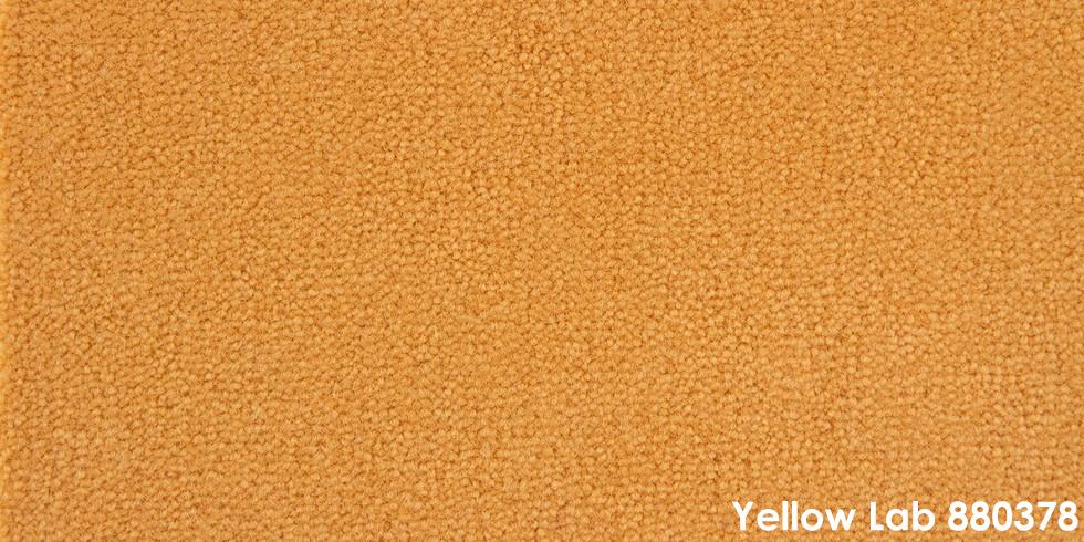 Yellow Lab 880378