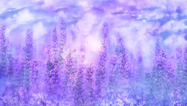violet-3054851.jpg