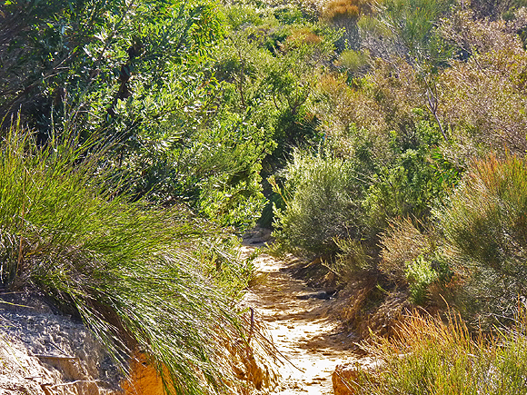sandy track through the thick bush