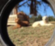 dogs in backyard.jpg