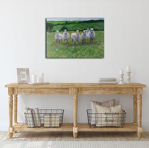 חמש כבשים
