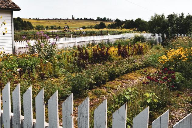 Chatfield Farms