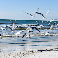 Birds of Marco Island