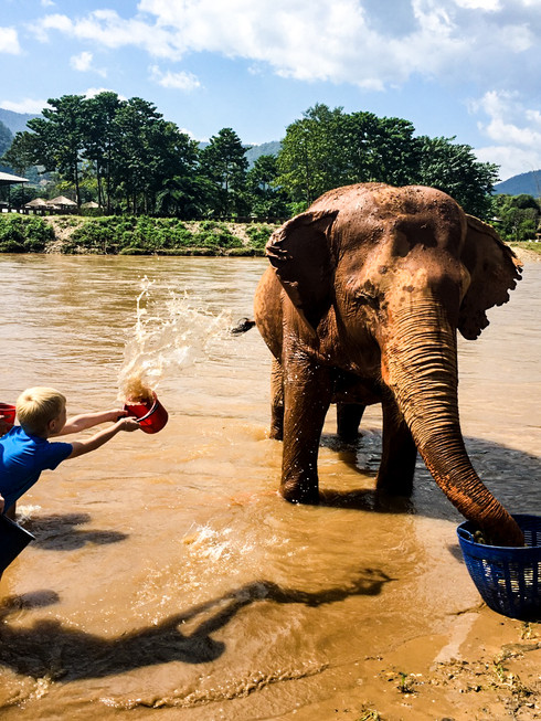 Elephant Nature Park in Thailand