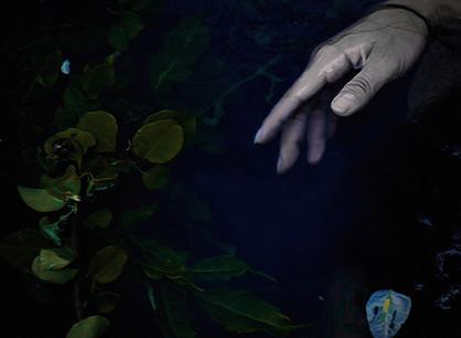 Isaurian - Chains of Blue – Álbum