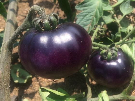 Tomate 'Indigo' (Lycopersicon esculentum)