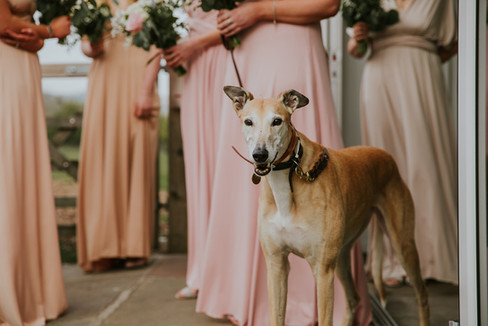 dog waiting outside wedding venue for the bride to arrive