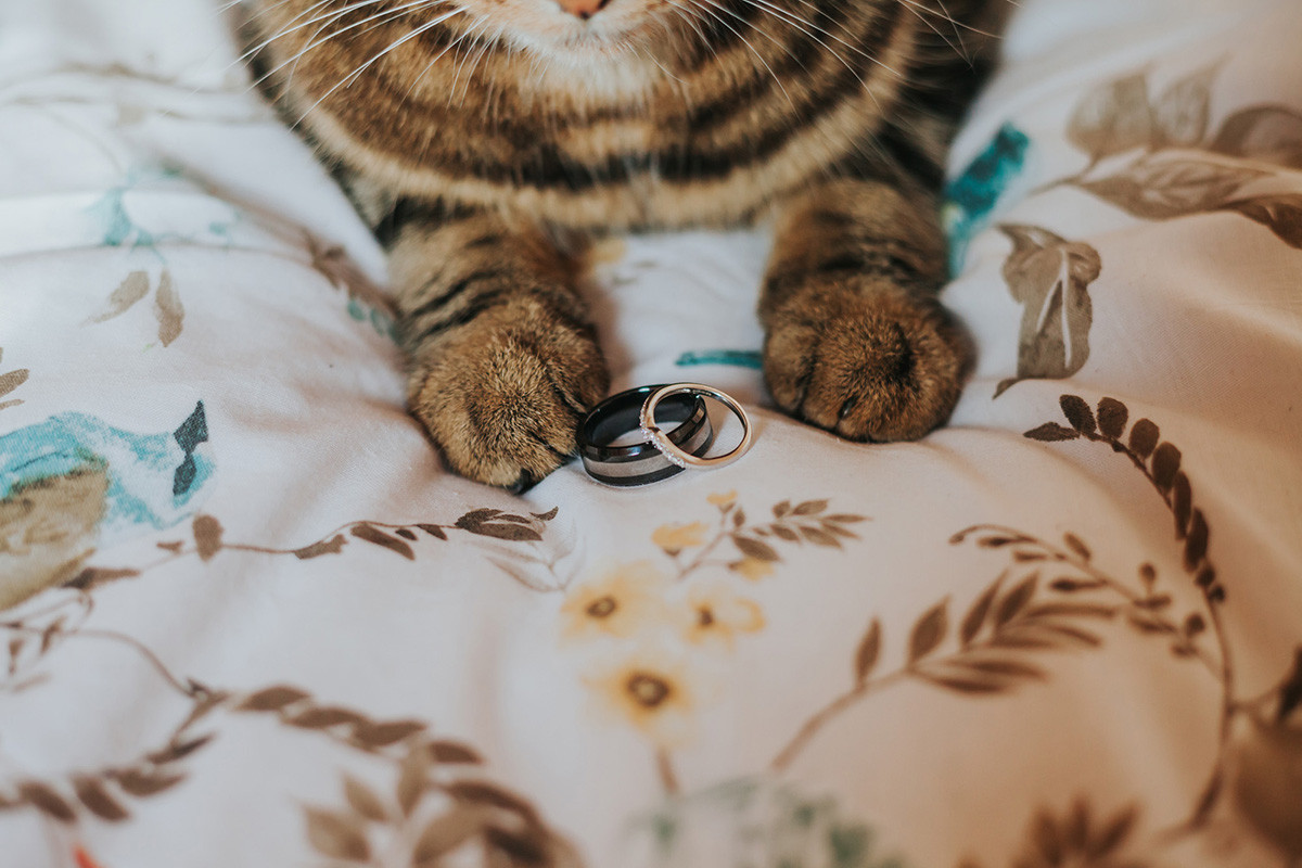 Cat With Wedding Rings