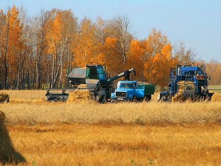Новосибирские фермеры в 2020 году получат повышенные гранты на развитие
