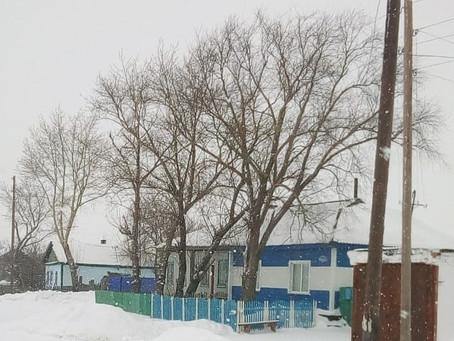 Новые деревья на месте старых высадят в Елизаветинке