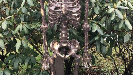 decayed skeleton