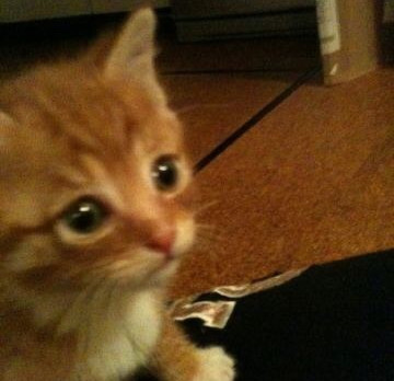 〜CAT LOVER〜ロビンが赤ちゃんの頃の写真を見て悶絶するだけのBLOG