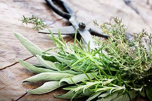 Freshly harvested herbs with old antique