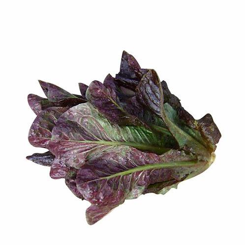 Lettuce – Breen (Mini Romaine)