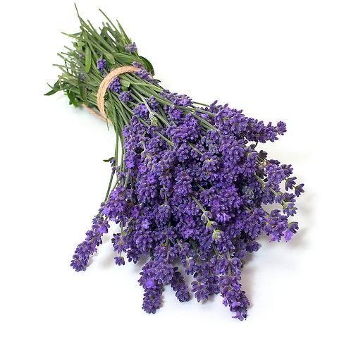 Lavender – Elegance Purple