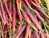 Purple Eastern Carrots at Farmers Market