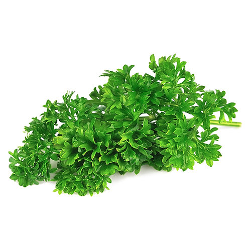 Parsley – Giant of Italy