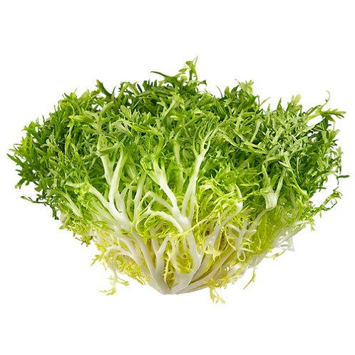 Lettuce – Endive