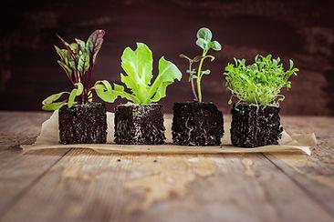 Vegetable seedlings  on rustic wooden ta