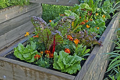 A raised bed of vegetables and flowers i