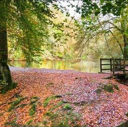 Waggoners Wells & Ludshott Common