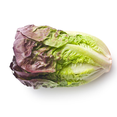 Lettuce – Red Romaine