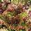 Thumbnail: Tower Garden seedling starter pack