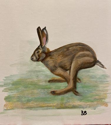 Hare on the run