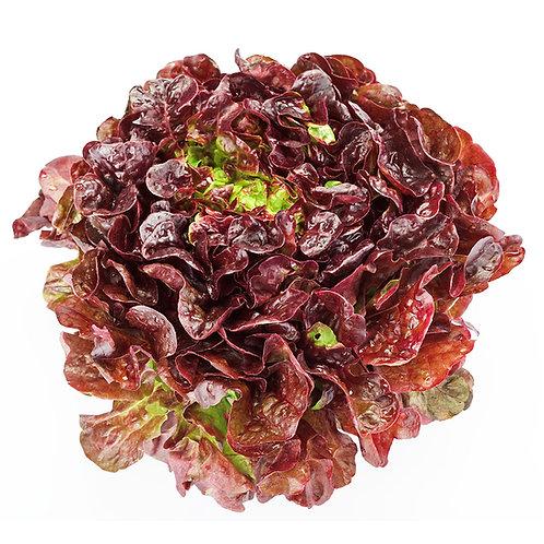 Lettuce – Cherokee (SC)