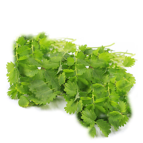 Salad Greens – Salad Burnet
