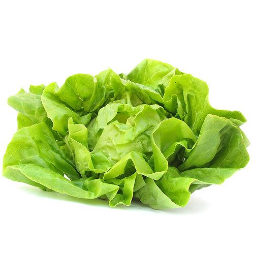 Lettuce – Rex (Bibb)