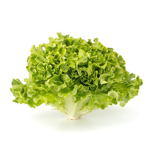 Lettuce – Muir (SC)