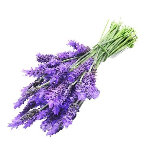 Lavender – Munstead