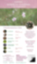 Cartaz - Jornada Florais e o Feminino.jp