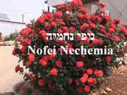 45-Nofei Nechemia.JPG