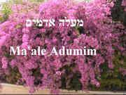11-Maale Adumim.JPG