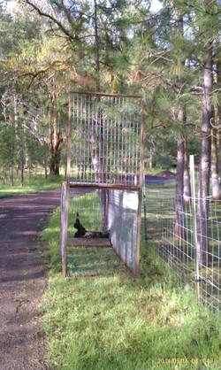 trap baited with lamb kill