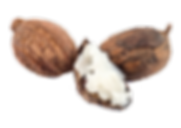 IMGBIN_shea-butter-vitellaria-nut-goat-m