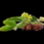 IMGBIN_jojoba-oil-seed-oil-png_HHzzVfP4.