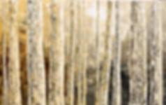 Original landscape painting by Tatiana Iliina Secret of Observation birch forest palette knife, autumn, winter