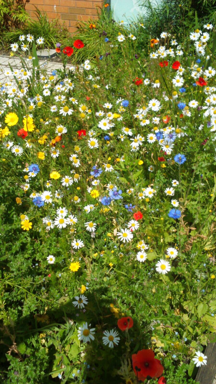 Raploch Schools Wildflower Beds - IMG_1844