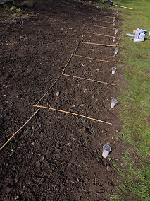 Soil, Seed Sowing